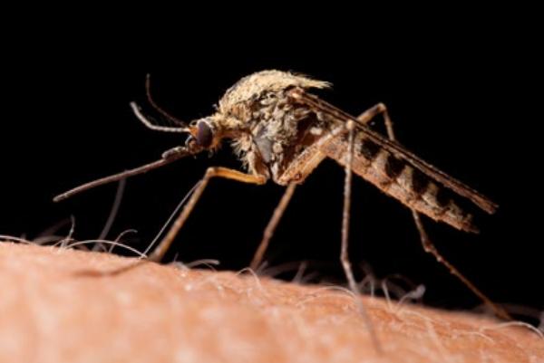 zanzara zoom
