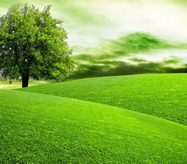 marchio-qualita-ecologica-ecolabel-ue-compe-25-anni